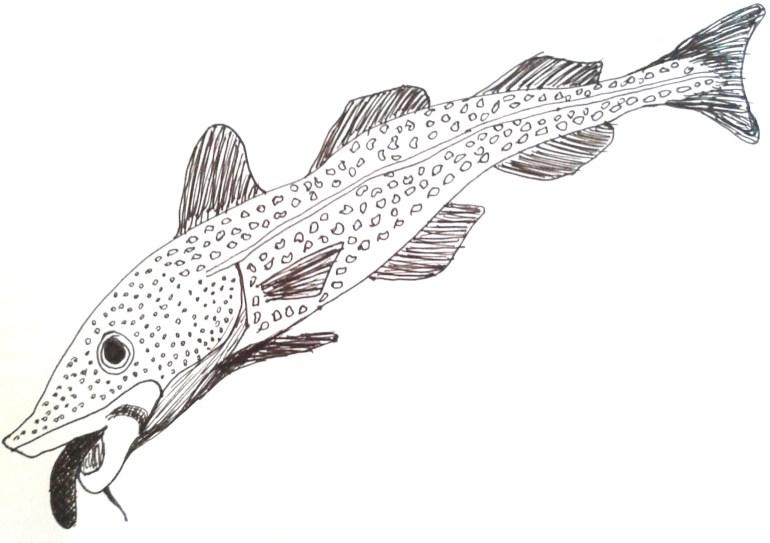 Cod Tongue