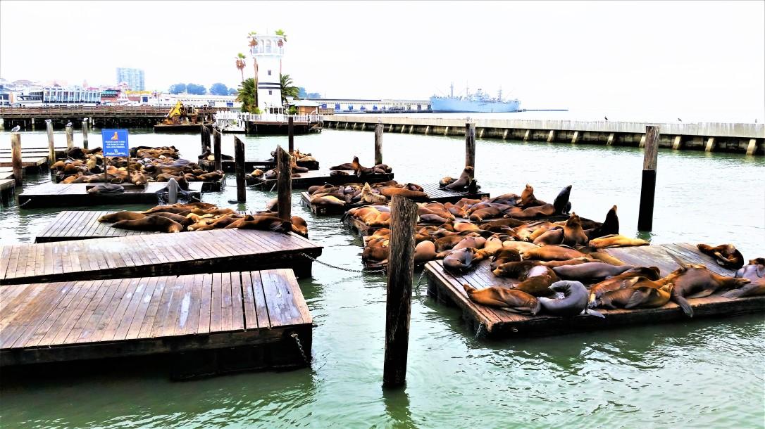 Pier 39.jpg