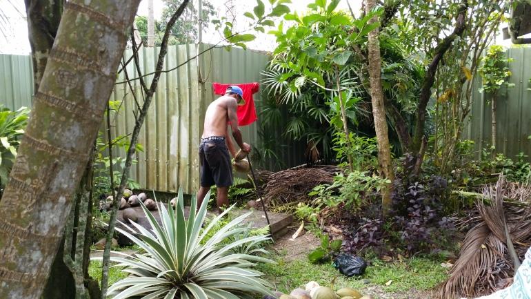 Fiji coconut husking