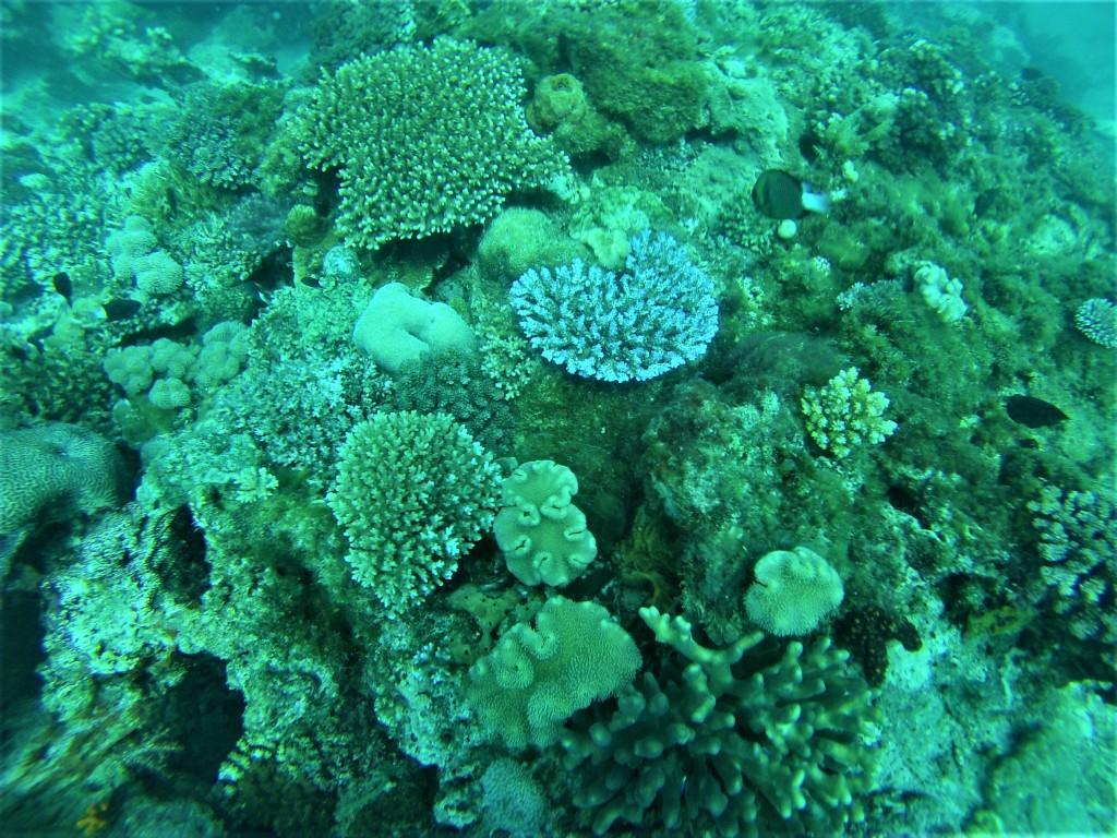 Beqa Fiji dive coral