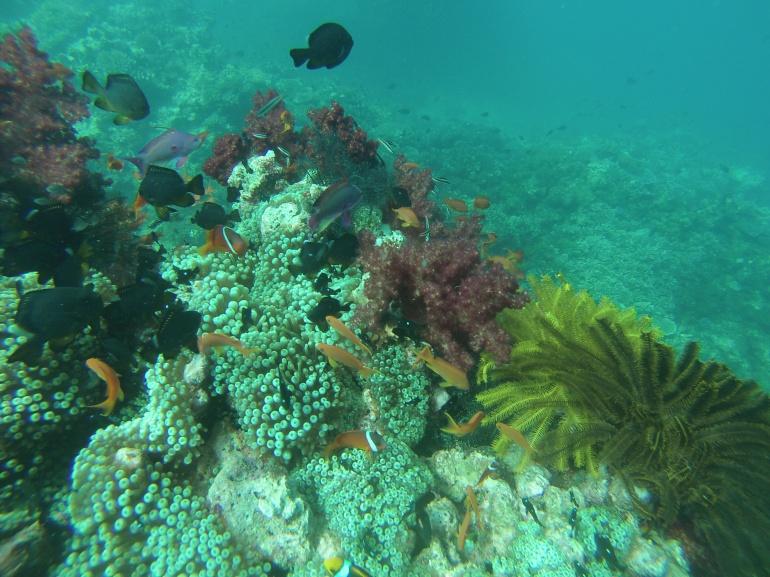 Beqa Fiji dive coral and fish