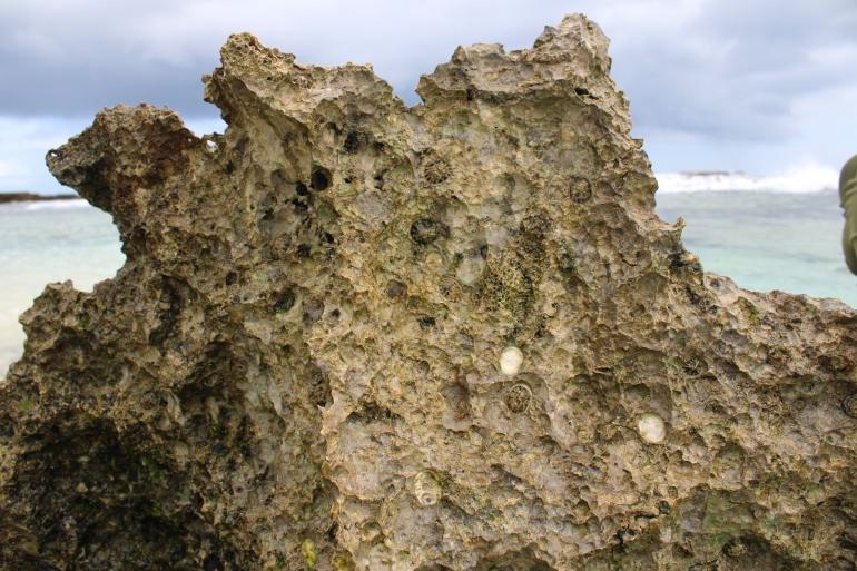 Marine fossils Tonga