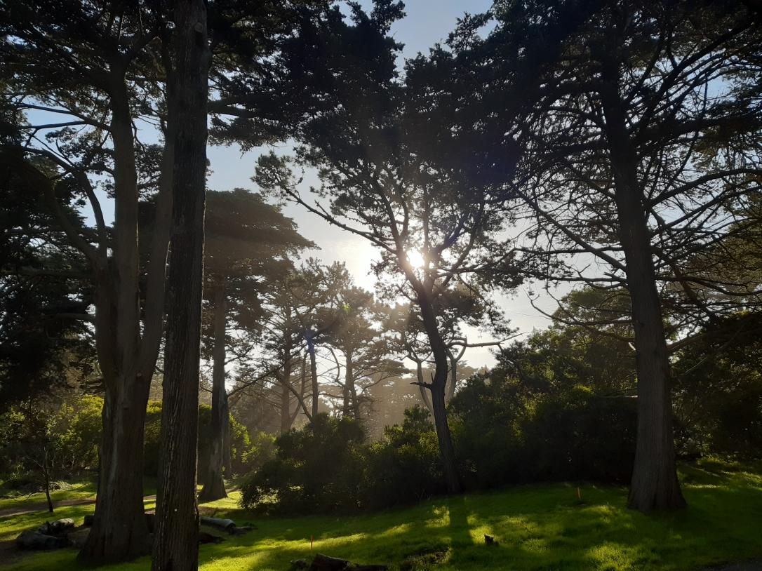 Golden Gate Park San Francisco