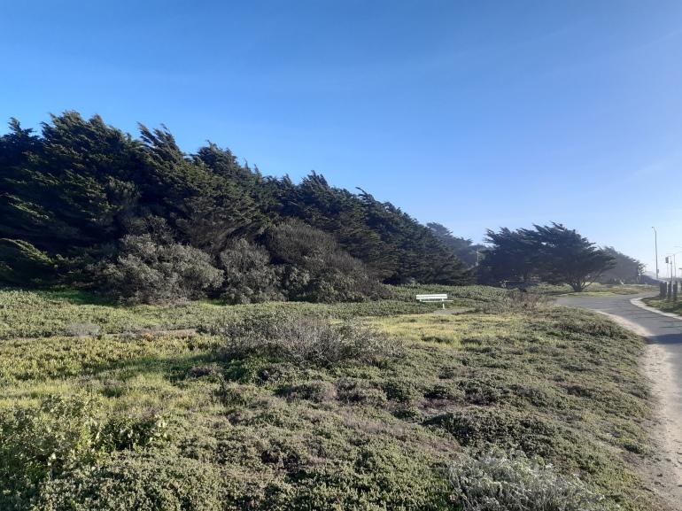 trees Ocean Beach San Francisco