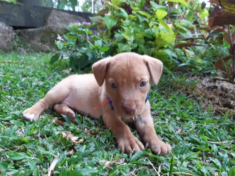 puppy potty training yard