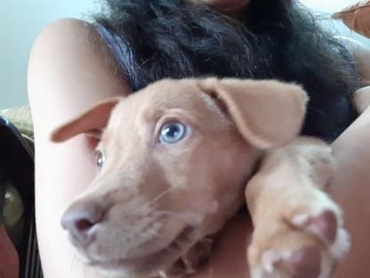 Fiji puppy Jolene