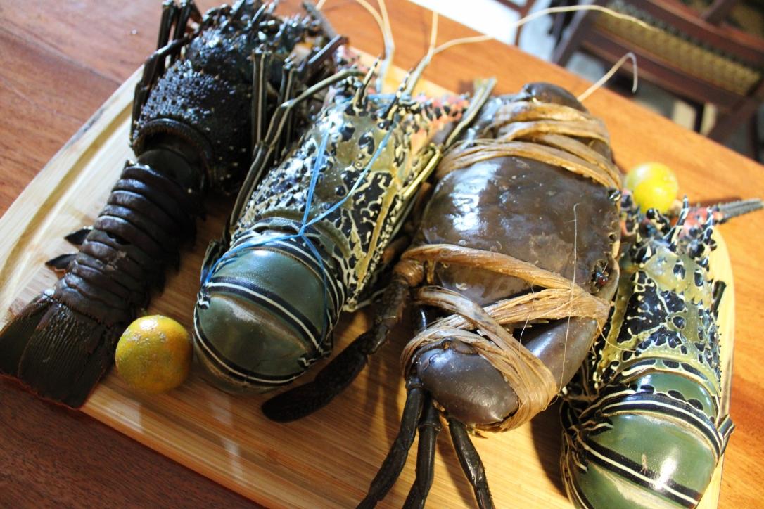 Fiji lobsters mud crab crayfish