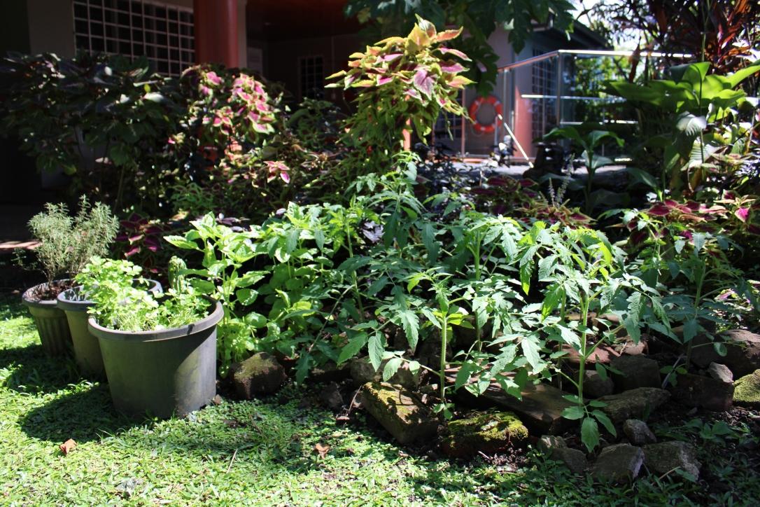 Fiji garden