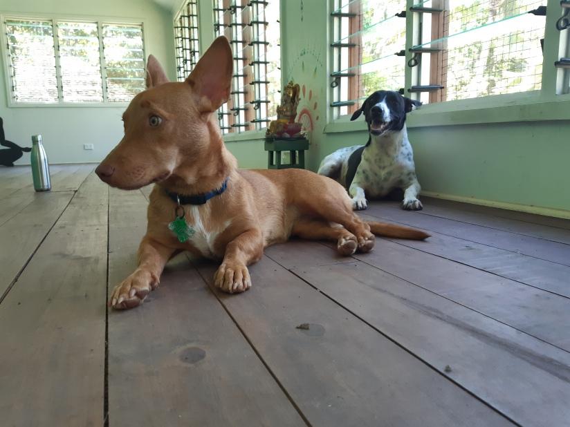 Waidroka yoga room