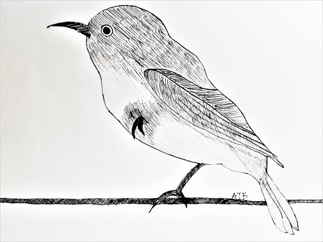 Bird on Wire ATB