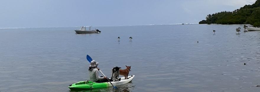 kayaking Waidroka Bay